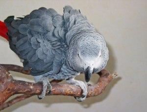 Aggressive grey