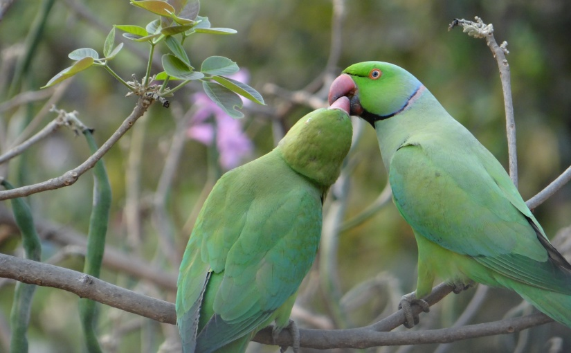 Avoid the Pair Bond: Social Relationships with Parrots