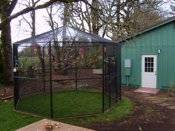 Aviary between log home and guest house