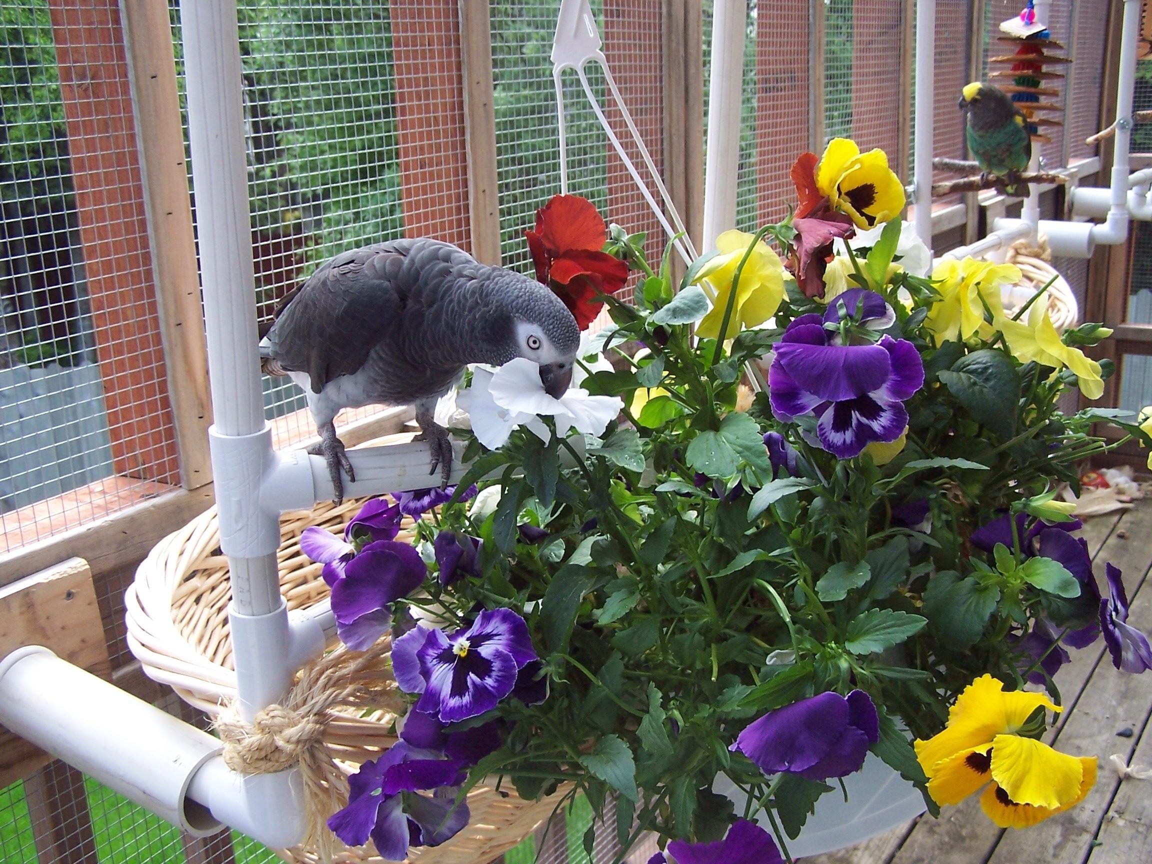 ParrotAndFlowers Aviary.KrisPorter