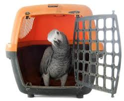 Parrot in Carrier