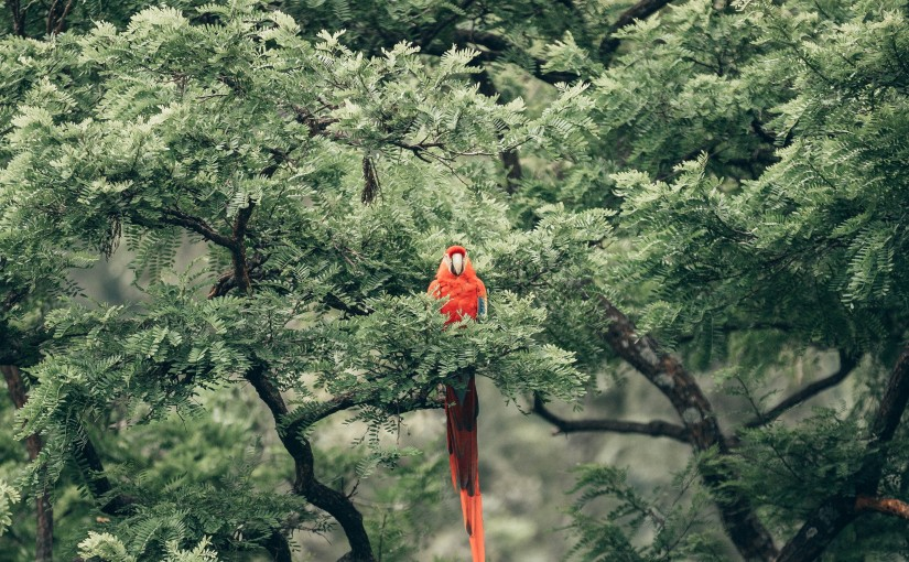 Parrots and the Need for Nature