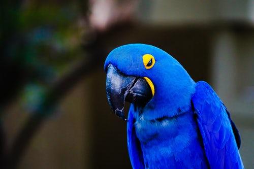 Suspicions and Fears about Avian VeterinaryCare