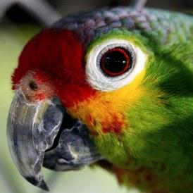 parrot-55293__340