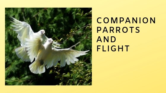 Part One: Parrots,  Flight, and Humans