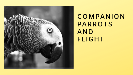 Part Five: Cooperative Living with Flighted Parrots