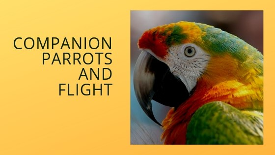 Part Six: Ensuring the Safety of Your Flighted Parrot