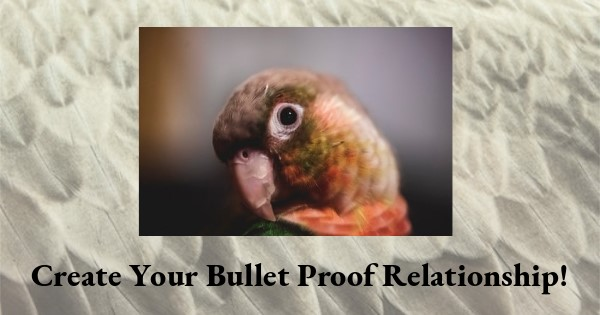 How to Create A Bullet Proof Relationship with Your Parrot
