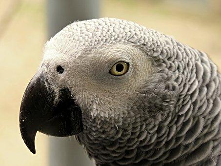 parrot-2005767__340