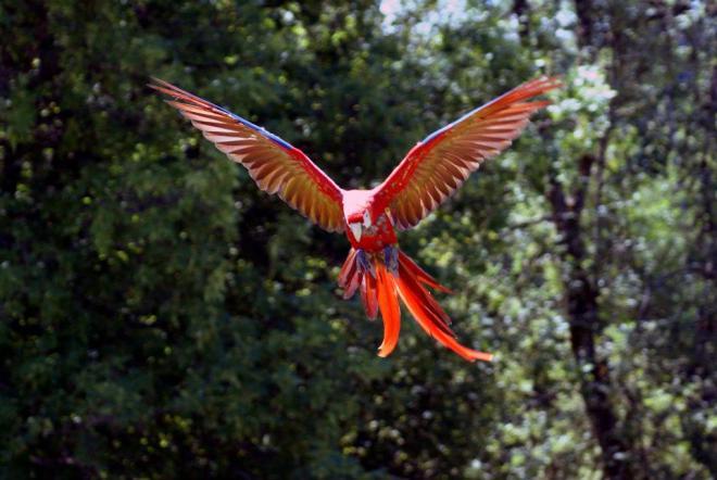 S.Macaw.M.Major.CDRetreat
