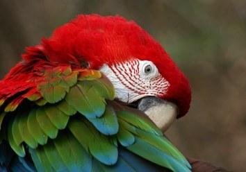 bird-1298346__340