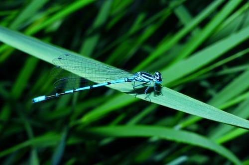 dragonfly(2)