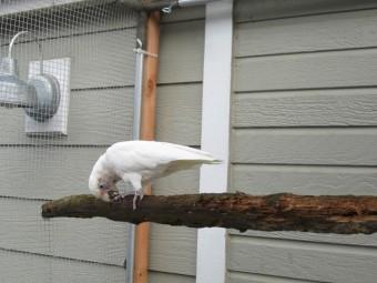 Ellie in Aviary
