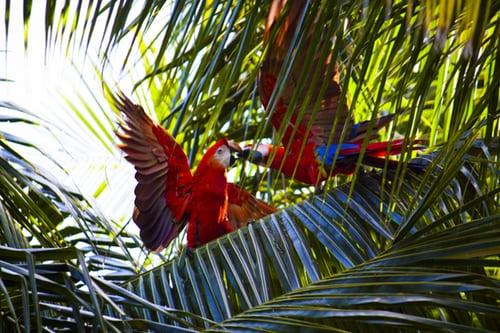 Macaws.Wild