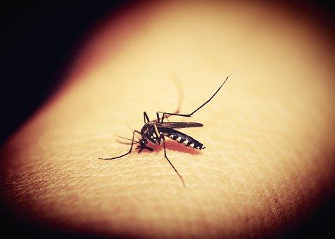 MosquitoBite(1)