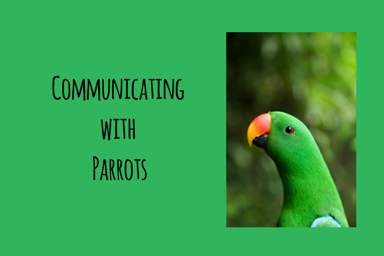 Essential Guide to Communicating with Parrots