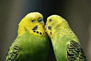 parrot training – Pamela Clark, CPBC