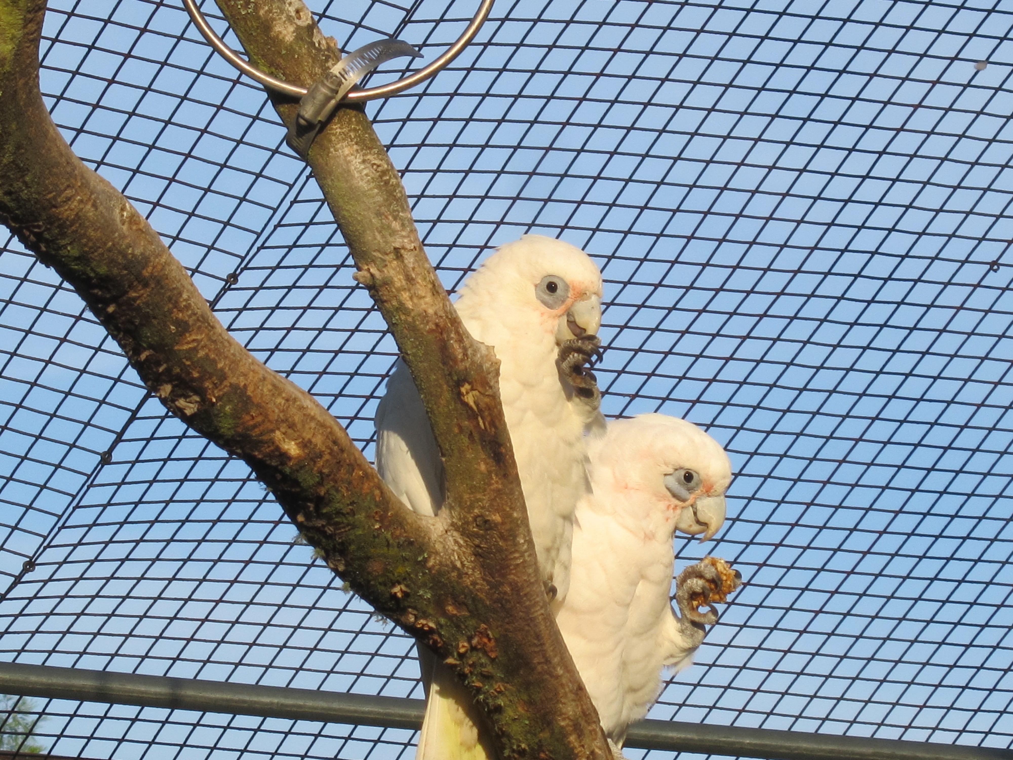 training parrots – Pamela Clark, CPBC