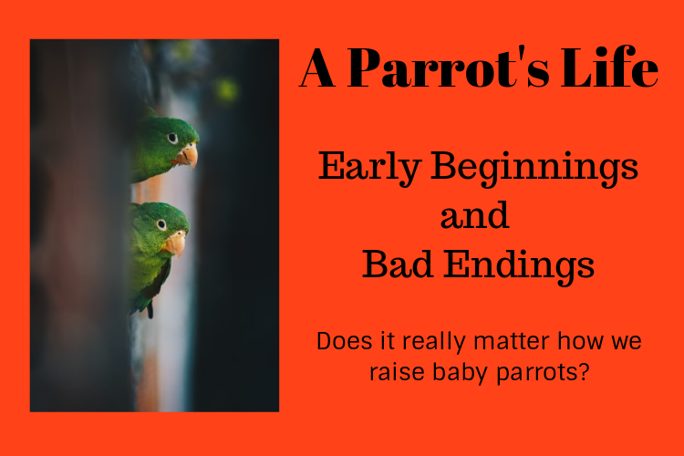 Early Beginnings for Parrots