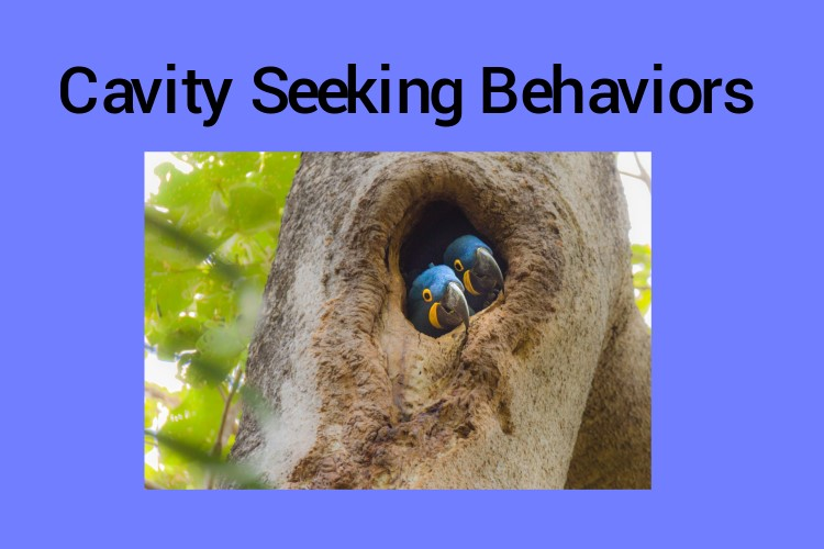 Cavity Seeking in Companion Parrots