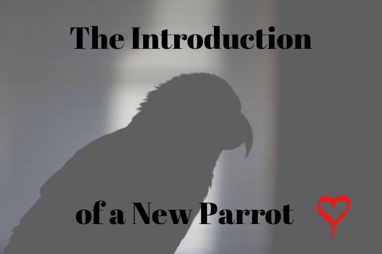 The Introduction of a New Parrot